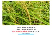【単一原料米の食品表示】名称、原産地表記のほかに様々な個別的義務表示が必要ですよ。 アイキャッチ